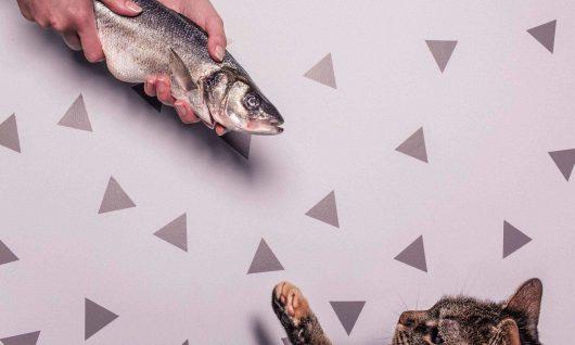 Bild zum Blogbeitrag, das eine Katze und einen Fisch zeigt
